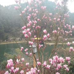 Qingyunhu Forest Park User Photo