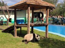 鞍山动物园-鞍山-C年度签约摄影师