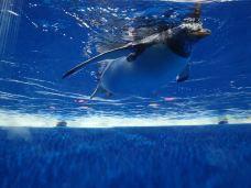 哈尔滨极地公园·海洋馆-哈尔滨-M25****5570