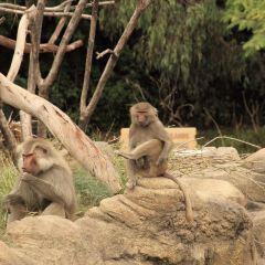聖地亞哥動物園用戶圖片