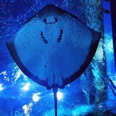 アトランティス・ザ・パーム/ロスト・チェンバー水族館のユーザー投稿写真