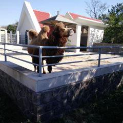 칭다오(청도) 동물원 여행 사진