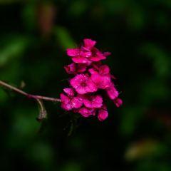 노블링카 여행 사진