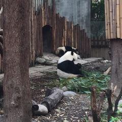 成都ジャイアントパンダ繁殖研究基地のユーザー投稿写真