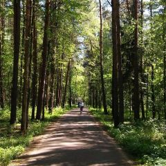Meshherskoye User Photo