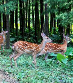 佛冈游记图文-自驾清远佛冈,玩转森波拉度假森林,感受梦幻般的森境光影