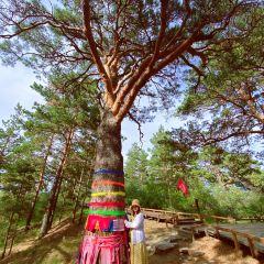 하이라얼 서산국립삼림공원 여행 사진