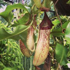 凱恩斯植物園用戶圖片