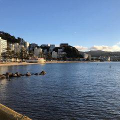 Oriental Bay User Photo