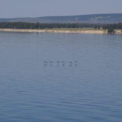 黃石湖用戶圖片