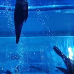 杭州海底世界用戶圖片