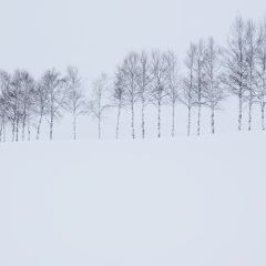 Biei User Photo
