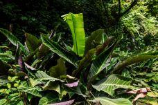 莫里热带雨林景区-瑞丽