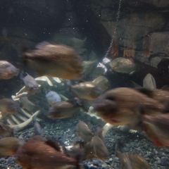 Jakarta Aquarium User Photo