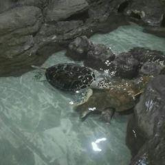 Hangzhou Underwater World User Photo