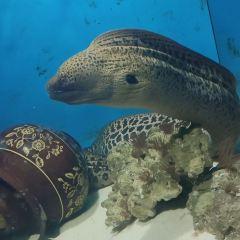 Happy Underwater World User Photo