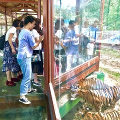Luanchuanzhuhai Yesheng Zoo User Photo