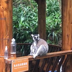 백봉협 야생 동물원 여행 사진