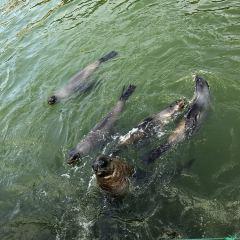 Shendiao Wild Animal Nature Reserve User Photo