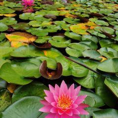 칭다오(청도) 세계원예박람원 여행 사진