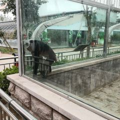 황금강 리조트 여행 사진