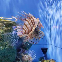 Beijing Aquarium User Photo