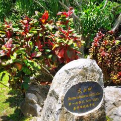 Xishuangbanna Tropical Botanical Garden, Chinese Academy of Sciences User Photo