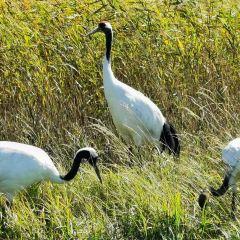扎龍自然保護區用戶圖片