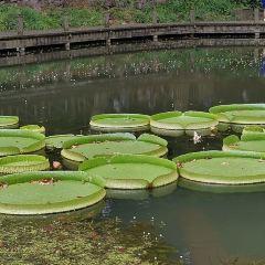 우한 식물원 여행 사진