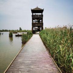 Yancheng Wetland National Nature Reserve Rare Birds User Photo