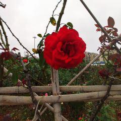 湖南省森林植物園用戶圖片
