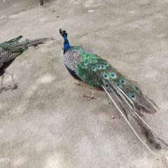 靈峰山森仙動物農場用戶圖片