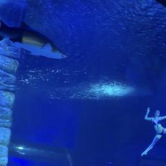 정자(정가) 극지해양세계(지디하이양스제) 여행 사진
