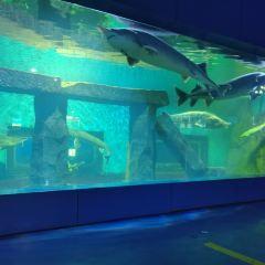 歡樂海底世界用戶圖片