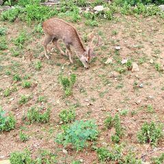 취안저우하이쓰 야생동물원 여행 사진
