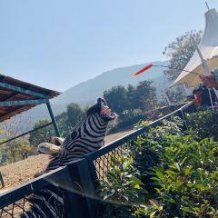 无錫動物園(太湖歓楽園)のユーザー投稿写真