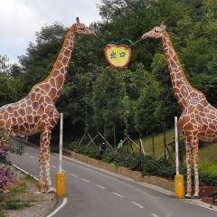貴州森林野生動物園用戶圖片