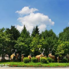 北方森林動物園用戶圖片