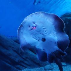 Polar Ocean World User Photo