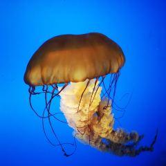 合肥海洋世界用戶圖片
