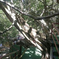 五指山熱帶雨林風景區用戶圖片