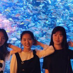 하오하이 리팡 해양관 여행 사진