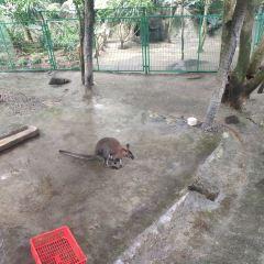 呀諾達雨林文化旅遊區用戶圖片