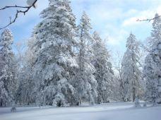 哈尔滨+雪乡+吉林市5日4晚跟团游·冰雪大世界+ 雪谷穿越(雪圈 滑冰 爬犁 雪地摩托)雪乡+吉林滑雪2小时+雾凇岛 1单1团