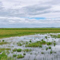 俄麼塘花海景區用戶圖片