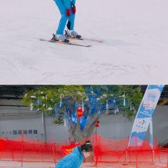 三隻熊滑雪場用戶圖片