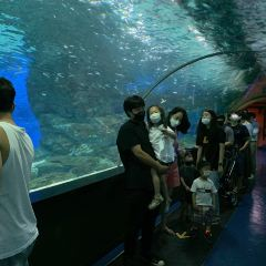 COEX Aquarium User Photo