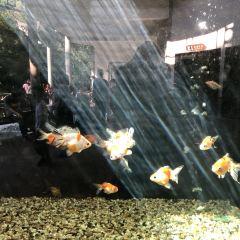 Hangzhou Zoo User Photo