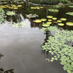 Manting Park User Photo