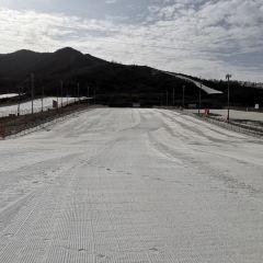 照金國際滑雪場用戶圖片